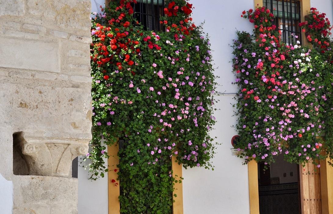 Cordoba 24 Concurso Popular De Rejas Y Balcones 2019